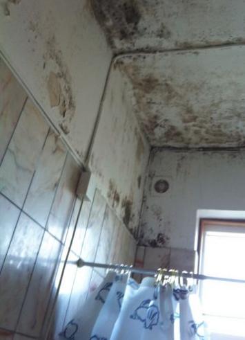 Skimmelsvamp på badeværelset: 5 effektive metoder til fjernelse og forebyggelse